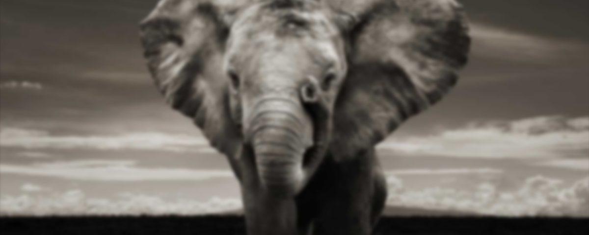 metafory słoń, rozmyty, szary